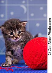 Cute siberian kitten with bright red yarn ball over...