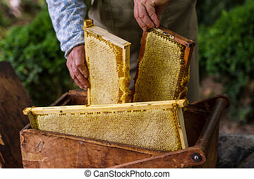 Beekeeper working on bee hive - Beekeeper working with old...