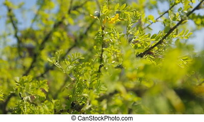Tree branches covered with green leaves fluctuate on air....