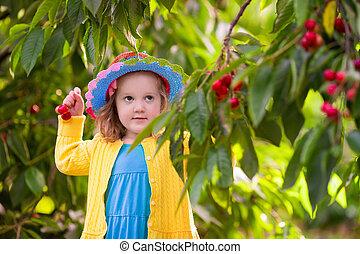 Little girl picking cherry from garden tree - Kids picking...