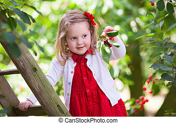Little girl picking cherry - Kids picking cherry on a fruit...