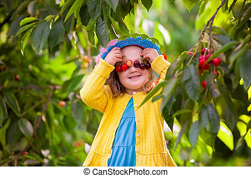 Little girl picking cherry from garden tree - Kids picking...