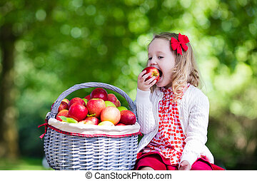 Little girl with apple basket - Child picking apples on a...