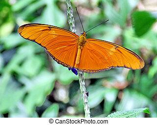 Niagara Julia butterfly 2016 - Julia butterfly in garden of...