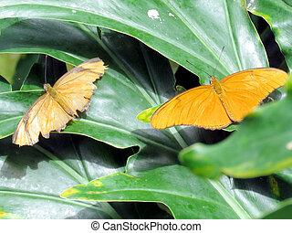 Niagara Julia butterfly on a green 2016 - Julia butterfly on...