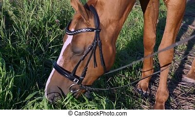 Horse eats grass at hot summer day