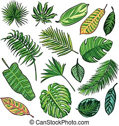 Tropical Leaves Collection, isolate vector.Big Set