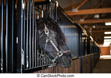 Horse in the stall - big stable