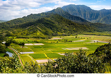 Landscape view of Hanalei valley and green taro fields,...