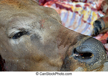 cow slaughteron the moslem ceremonial