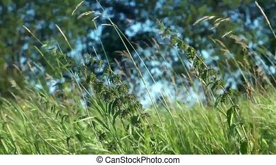 Nettle and grass at hot summer day