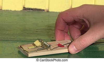 hand prepare wooden mouse trap with piece cheese on floor. 4K