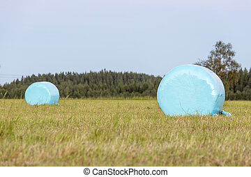 Wrapped Blue Silage Bales