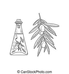 Olive Oil In Glass Bottle And Branch Hand Drawn Realistic Sketch