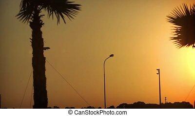 Aircraft landing at sunset. Setting sun through the palm...
