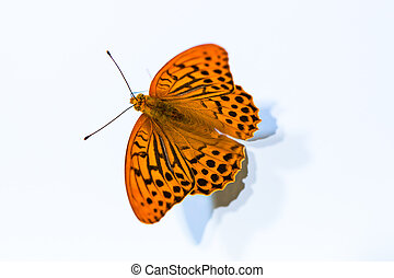 Isolated argynnis paphia butterfly - Isolated argynnis...