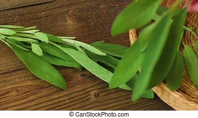 Fresh sage on wooden table - Medical herbs Fresh sage on...