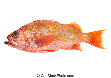 Red Fish with white background
