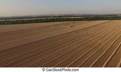 Harvester threshing wheat aerial view from afar.