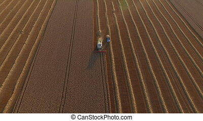 combaine harvester unload wheat top view - Combaine...