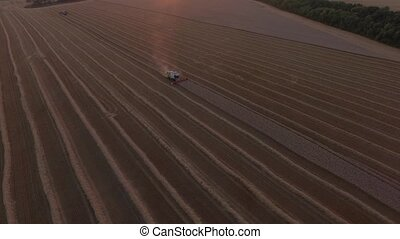Combaines threshing wheat at sunset.