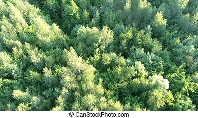 trees in the meadows aerial view - trees in the green...