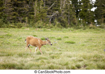 Deer grazes in the meadow.