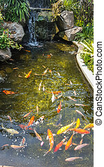 Koi pond, fish pond