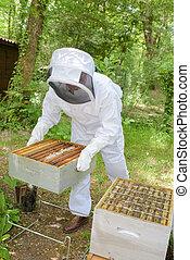 ocupado, apicultor