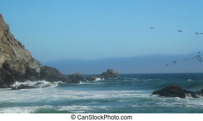 California beach birds - Birds at Pfeiffer Beach in Big Sur...