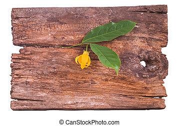 Climbing Ylang-Ylang flower and lea - Petal of Climbing...