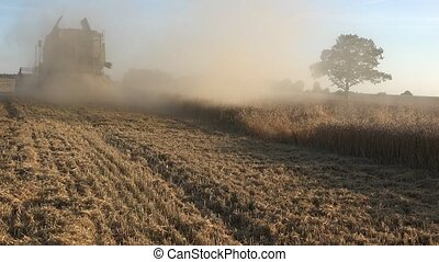 countryside combine work in cereal farm field and make dust...