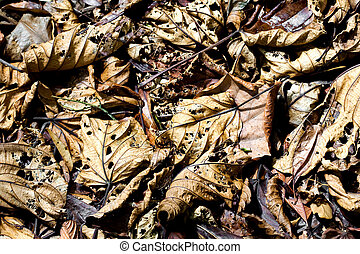 Background of fallen leaves decaying on the forest floor