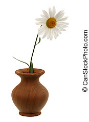 Ox-eye daisy in a vase it is isolated on a white background