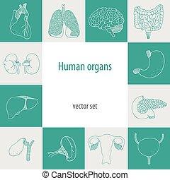 Human internal vector set