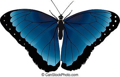 Butterfly light blue vector