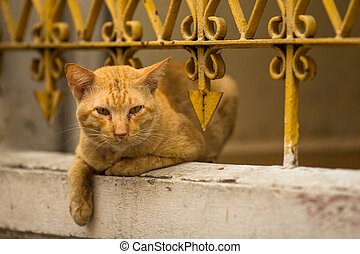 Stray ginger cat lies under the iron fence-lattice