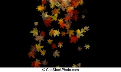 golden maple leafs flying - a group of golden maple leafs...
