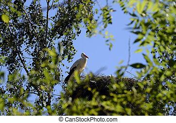 Cigüeñas, en, su, nido