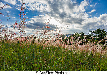 Grass with the sun behind