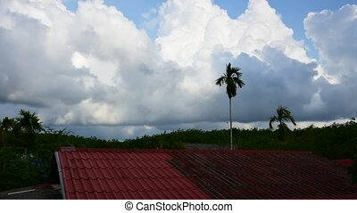 Daytime sky at rubber tree plantati