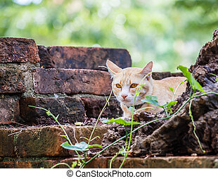 Cat on old brick wall