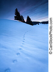 animal track on snow in mountains, Todtnauberg, Germany