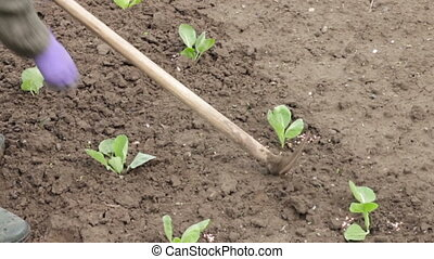 Woman working with hoe in the vegetable garden Planting...