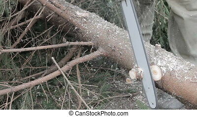 Worker cut a tree branch by chainsaw Forest care