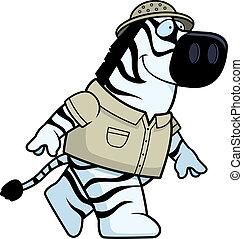 zebra, explorador