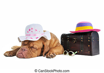 Ready for Vacation - Puppy is Ready to Go on Summer Vacation