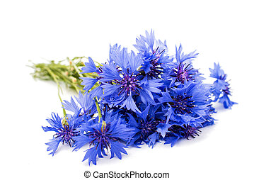 cornflowers flowers on a white background