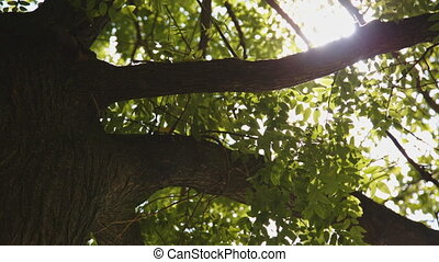 Sunlight through the trees - Sunlight breaks through the...
