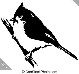 black and white paint draw cardinal bird vector illustration...
